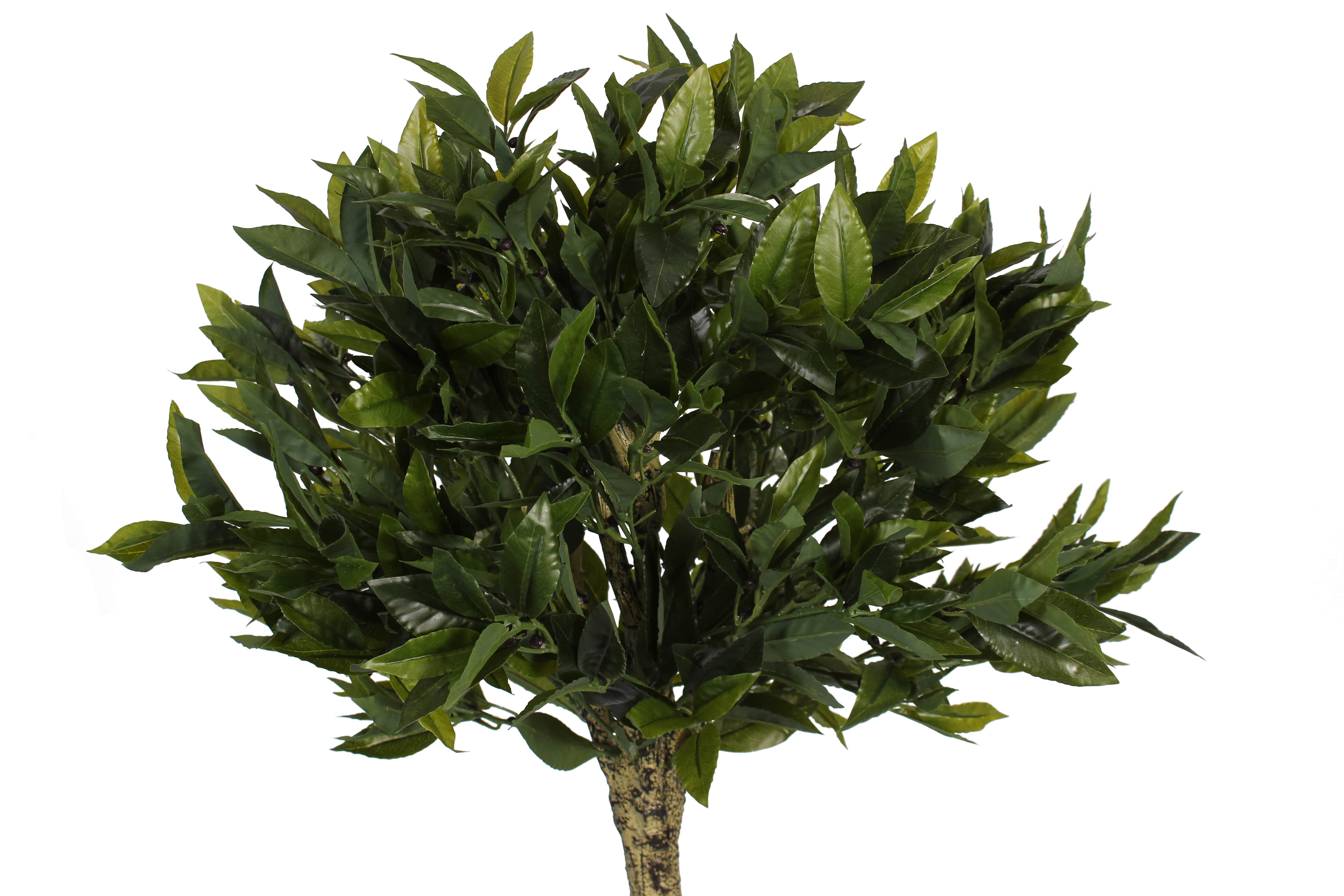 Direct Competitor Foliage