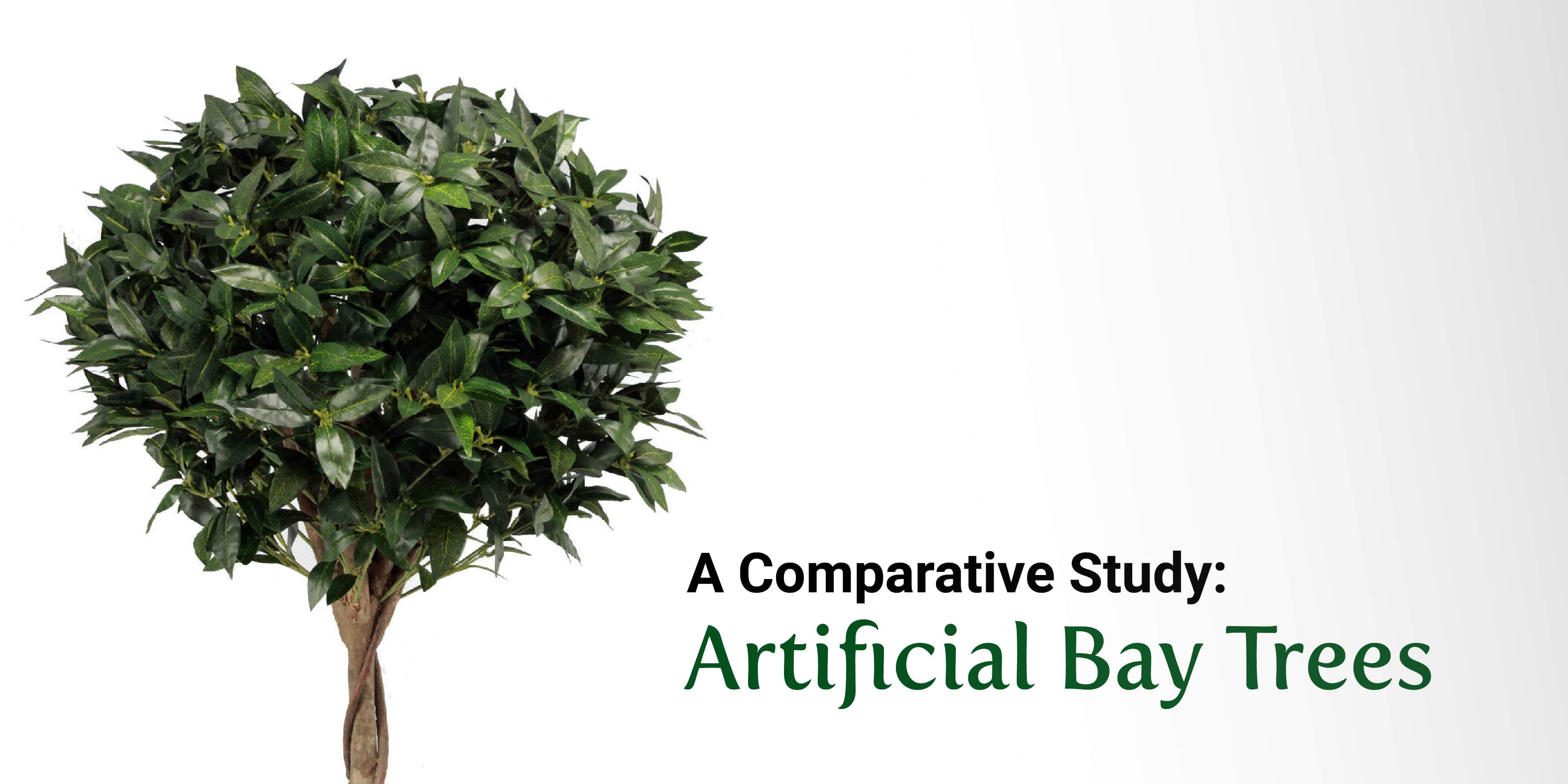 A Comparative Study: Blooming Bays vs. the Alternatives