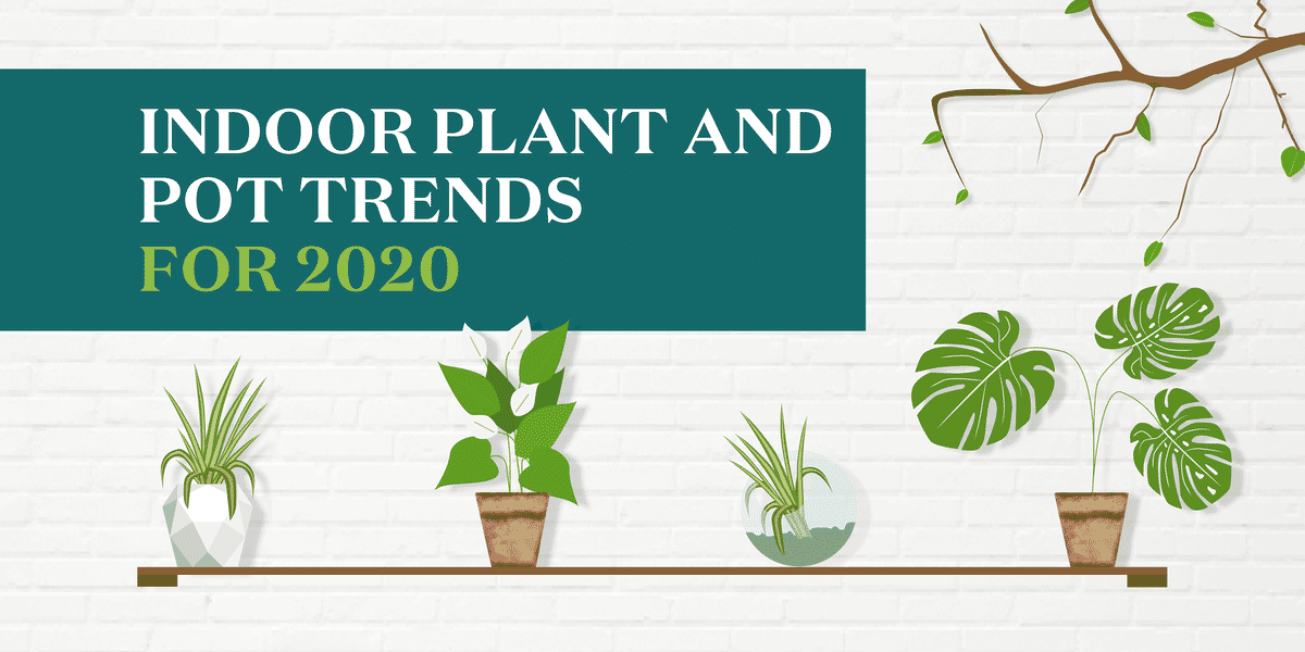 Indoor Plant and Pot Trends for 2020